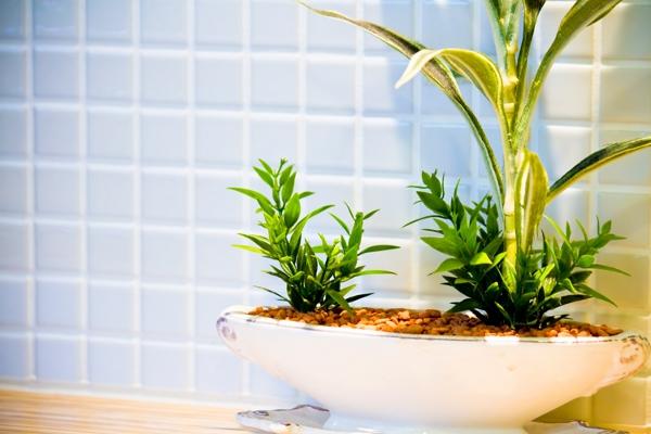 観葉植物と風水の5つの関係について知ろう!