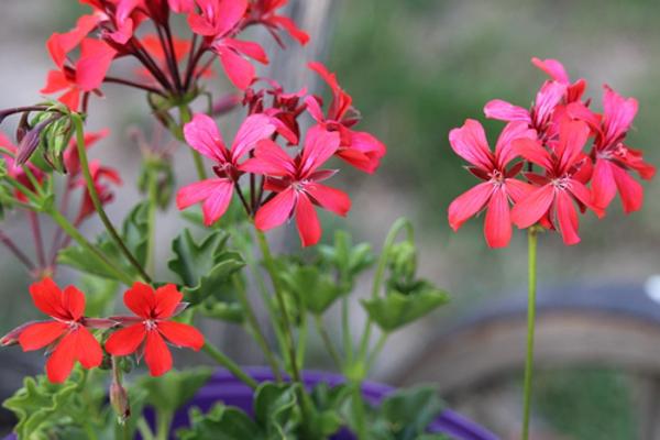 花言葉で絆を伝えるならこの5つがお勧め!