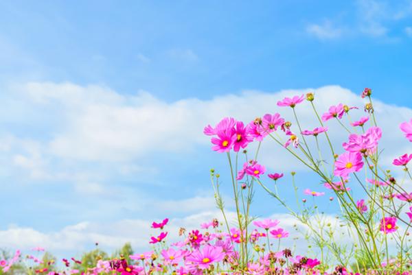 秋の花の花言葉で印象的な5つのもの