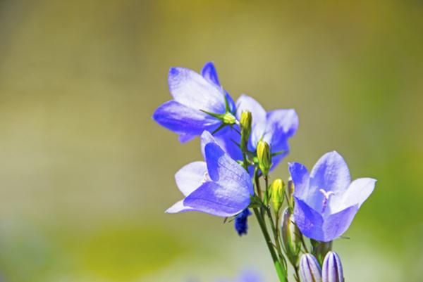 花言葉でごめんなさいの意味を持つ5つの花