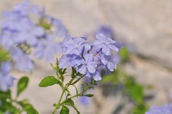 花言葉で春を感じさせるのはこの5つの花!