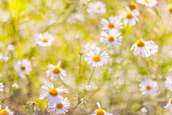 花言葉で友情を表す5つの花とは?