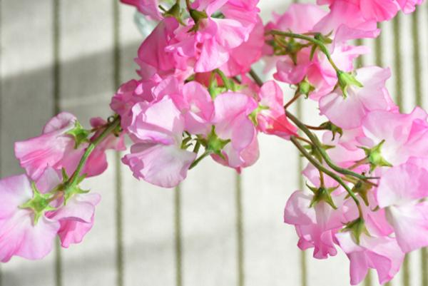 花言葉で勇気を表す5つのもの