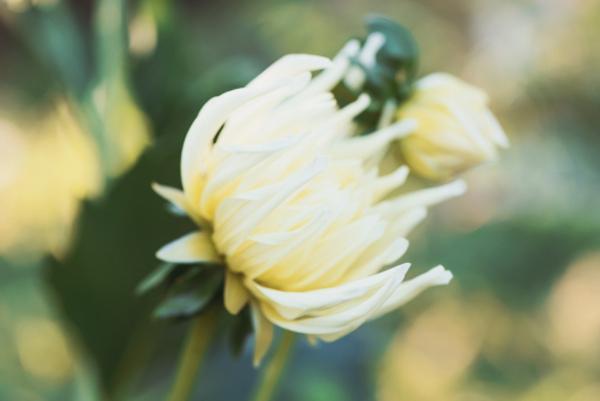 お疲れ様を伝える花言葉を持つ5つの花