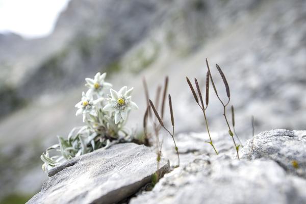 思い出を込めた花言葉一覧・素敵な贈り物にピッタリの種類